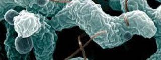 M.MED Microbiology